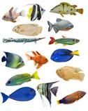Комплект 15 рыб на предпосылке Стоковые Изображения RF