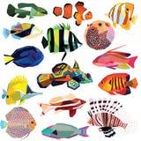 Комплект рыб Стоковая Фотография RF