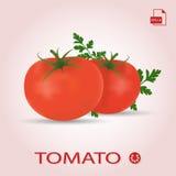 Комплект 2 свежих зрелых томатов с листьями бесплатная иллюстрация
