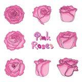 Комплект свежих розовых роз в нарисованном вручную стиле Стоковая Фотография