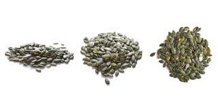 Комплект семян тыквы Стоковое фото RF