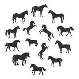 Комплект силуэтов вектора пород лошадей иллюстрация вектора