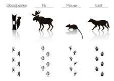 Комплект силуэтов животных и птиц черного леса: Woodpecker, e Стоковые Изображения RF