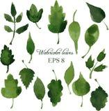 Комплект силуэтов листьями в акварели Стоковая Фотография