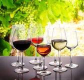 Комплект стекел с вином стоковое фото