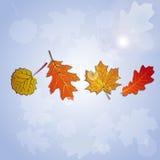Комплект стилизованных листьев осени с черным планом иллюстрация штока