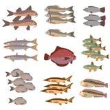 Комплект стиля различных рыб плоского Стоковые Фотографии RF