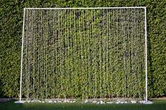 Комплект строки освещает для фона с зеленой предпосылкой листьев Стоковая Фотография