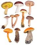 Комплект 10 съестных грибов изолированных на белизне Стоковые Изображения