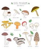 Комплект съестных грибов с названиями на белой предпосылке Стоковая Фотография