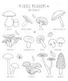 Комплект съестных грибов с названиями на белой предпосылке Стоковые Фотографии RF