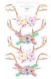 Комплект с antlers акварели, рожками entwined цветками, succulents, листьями и заводами иллюстрация вектора
