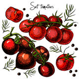 Комплект томатов нарисованных рукой Иллюстрация штока