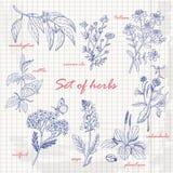Комплект трав в стиле эскиза на бумаге Стоковые Фотографии RF