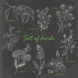 Комплект трав в стиле эскиза на темной предпосылке Стоковые Изображения