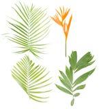 Комплект тропических листьев при цветок райской птицы изолированный дальше Стоковая Фотография