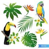 Комплект тропических цветков, листьев и птиц toucan вектор Стоковое фото RF