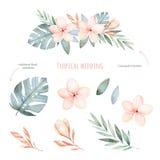 Комплект тропической свадьбы флористический Стоковые Изображения