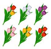 Комплект тюльпана Стоковая Фотография