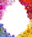 Комплект 4 углов цветка изолированных на белизне Стоковая Фотография RF