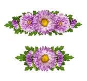 Комплект фиолетовой астры цветет линия расположения Стоковое Изображение