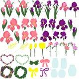 Комплект фиолетовых и розовых радужек, индивидуальных частей цветков, бутонов радужек, листьев радужек, цветки радужек, Стоковая Фотография