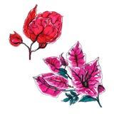 Комплект цветка бугинвилии декоративный Стоковое Фото