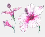 Комплект цветка гибискуса Стоковые Изображения