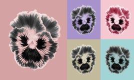 Комплект цветка Pansies Стоковые Фотографии RF