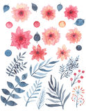 Комплект цветков акварели красных чувствительных и листьев сини иллюстрация штока