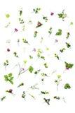 комплект цветков весны изолированных на белой предпосылке Стоковые Изображения