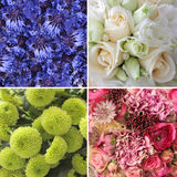 Комплект цветков Стоковые Изображения RF