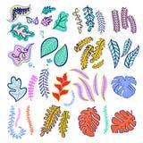 Комплект цветов тропических лист модных Стоковые Фотографии RF