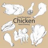 Комплект цыпленка нарисованного рукой Стоковая Фотография