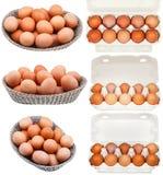 Комплект цыпленка eggs в контейнерах и корзинах Стоковое фото RF