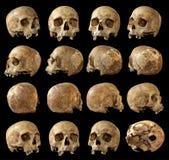 Комплект черепа на изолированной черной предпосылке Взгляд вокруг Стоковая Фотография