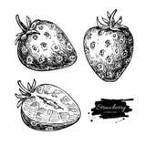 Комплект чертежа вектора клубники Изолированная ягода нарисованная рукой и sl Стоковые Изображения RF
