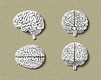 Комплект человеческого мозга иллюстрация штока