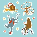 Комплект шаржа стикеров животных цирка Стоковое Изображение