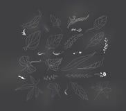 Комплект эскиза лист Стоковое Изображение