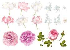 Комплект элементов цветка бесплатная иллюстрация