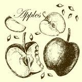 Комплект яблок чертежа иллюстрации Иллюстрация штока