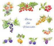 Комплект ягод акварели Стоковые Изображения RF