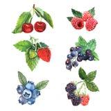 Комплект ягоды акварели бесплатная иллюстрация