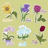 Комплект ярлыков цвета с цветками Иллюстрации чертежа руки Стоковое фото RF
