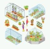 Комплект 3d стеклянного парника, очаг с саженцами Водоросли людей, цветки, овощи в саде кладут в постель, flowerbed Стоковое Фото