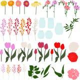 Комплект freesia, георгины, тюльпаны, herbera, лилия, выходит и раздражает Стоковое фото RF