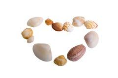 Комплект seashells в форме сердца Стоковые Фото