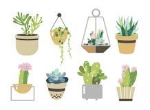 Комплект Succulent и кактуса Собрание в плоском стиле Стоковое Изображение