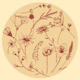 Комплект wildflower векторной графики Стоковое Фото